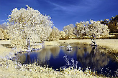 Nikon D70 Infrared Converted Camera 590nm Goldie Infrared Camera.590nm Infrared • 149£