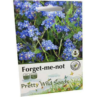 Forget-Me-Not Seeds Myosatis Arvensis Wild Flower 1,000 Seeds Pictorial Packets • 2.75£