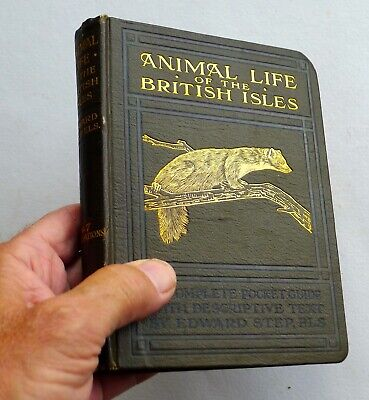 ANIMAL LIFE OF THE BRITISH ISLES A Complete Pocket Guide By EDWARD STEP 1927 • 8£