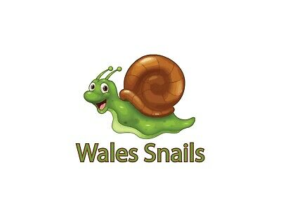 £15 • Buy Great Pond Snails Suitable For Pond Or Aquarium. 7 For £15 Inc. Shipping 🐌
