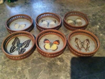 Vintage 6 X Pressed Real Butterfly/Moth Coasters Bamboo / Wicker & Holder 70s  • 2.90£