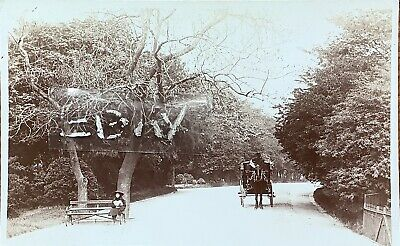 Sefton Park, Liverpool.  Real Photographic Postcard. • 8£