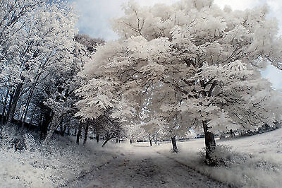 Nikon D80 Infrared Converted 720nm IR Camera Body Only Standard Infrared IR. • 185£