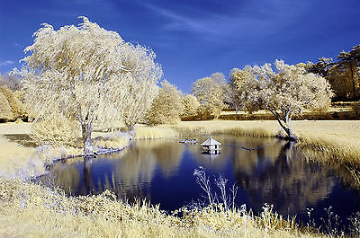 Nikon D70 Infrared Converted Camera 590nm Goldie Infrared Camera.590nm Infrared • 145£