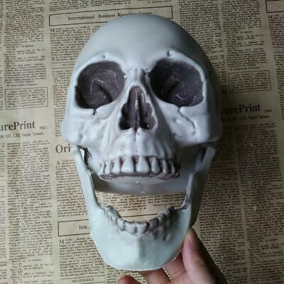 $ CDN4.41 • Buy Human Skull Decors Prop Skeleton Plastic Head Halloween Coffee Decoration T1Y5
