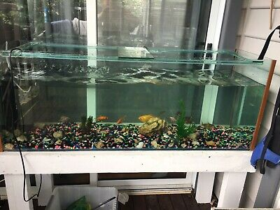 AU200 • Buy 4 Foot Fiah Tank With Stand And Filter Plus 11 Gold Fish & 4 Snails