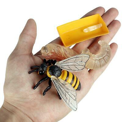 £4.84 • Buy Realistic Plastic Insects Bee Growth Toys For 1-7Years Old Kids Play Gift