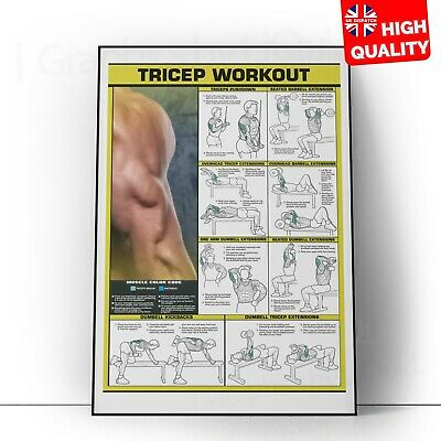 £2.99 • Buy GYM WORKOUT ALL BODY Tricep Exercise Poster Bodybuilding Print | A5 A4 A3 A2 A1