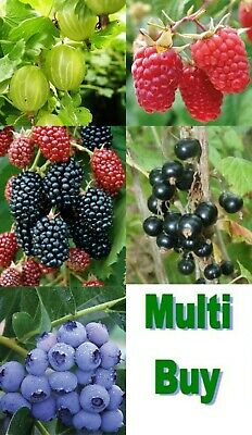 £7.99 • Buy Fruit Bushes - Several Varieties With New Growth. Plant Now Or Later,