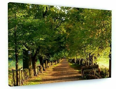 £22 • Buy WOODLAND FOREST TREES Canvas 20x30 Inches Wall Art Picture