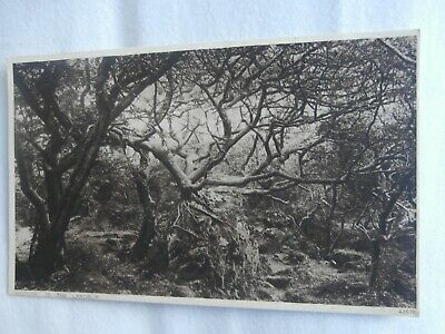 £1.75 • Buy Ventnor Isle Of Wight - In The Landslip - Photochrom Early Postcard