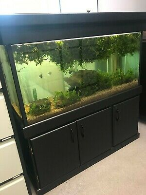 AU100 • Buy Aquarium - Fish Tank - Complete Setup With Stand/cupboard - Good Working Order