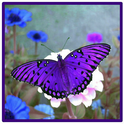 £7.99 • Buy Purple Butterfly - Set Of 4 Novelty Fun Coasters - Brand New / Gifts