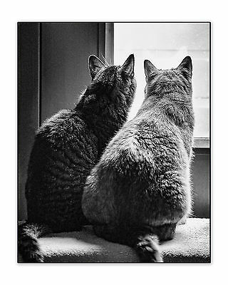Original Fine Art Photograph 8x10 Signed Print Black & White Cat Looking Window • 37.70£