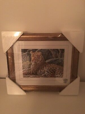 Stephen Gayford Print  Serengeti Evening  • 20£