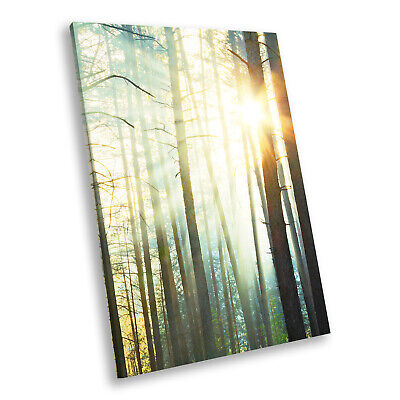 Forest Trees Sunset Nature Portrait Scenic Canvas Wall Art Large Picture Prints • 14.99£