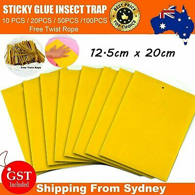 AU6.89 • Buy Bulk Yellow Sticky Insect Killer Whitefly Thrip Fruit Fly Gnat Leafminer Trap AU