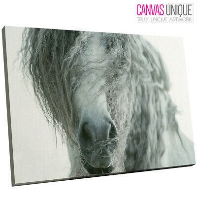 $13.88 • Buy A669 Grey Horse White Majestic Photo Animal Canvas Wall Art Framed Picture Print