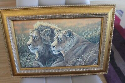 4 Framed Tiger Prints By Stephen Gayford Limited Edition In Good Condition • 28£