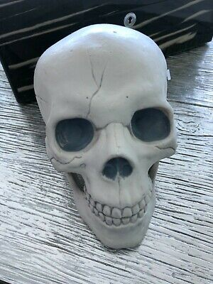 $14 • Buy  Plastic Skeleton Head With Movable Jaw