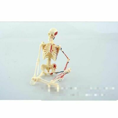 $40.84 • Buy Human Skeleton Model Teaching Resources Medical Anatomy Plastic Assembled Puzzle