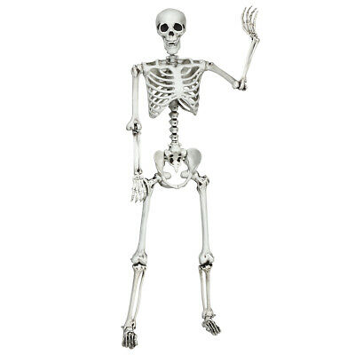 $47.99 • Buy 5.4ft Halloween Skeleton Life Size Realistic Full Body Hang W/ Movable Joints