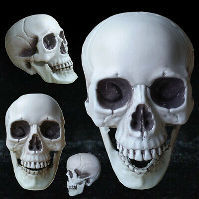 $2.59 • Buy All Size Human Skull Head Skeleton Halloween Style Prop Home Party Decor Casual