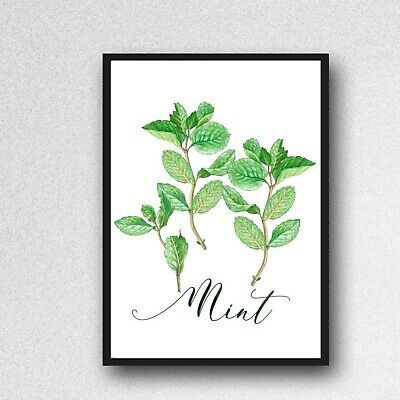 £3.99 • Buy Mint Herb Print PICTURE Kitchen Plant WALL ART A4 Unframed Poster Gloss