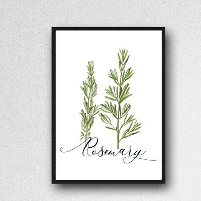 £3.99 • Buy Rosemary Herb Print PICTURE Kitchen Plant WALL ART A4 Unframed Poster Gloss