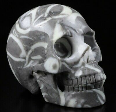 $0.95 • Buy Huge 5.0  RARE FOSSIL Carved Crystal Skull, Realistic, Crystal Healing