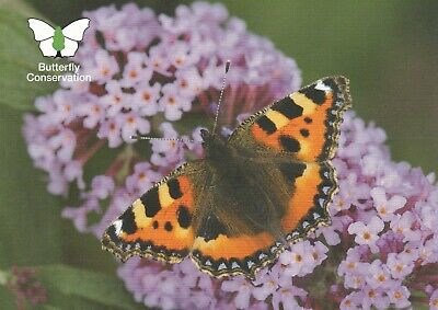 Butterfly Conservation Postcard Of Small Tortoiseshell By Jim Asher • 2.50£