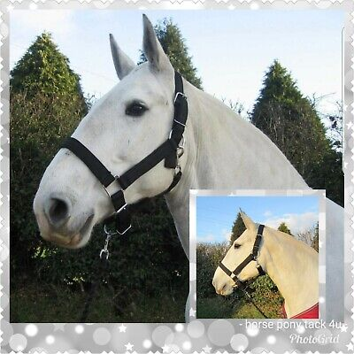 Back In Stock Extra Full Size Strong Shire Draft Horse Clydesdale Headcollar • 16.95£
