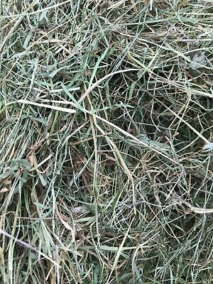 £5.99 • Buy Natural Welsh Meadow Hay -  Perfect For Horses/small Animals - Feed And Bedding