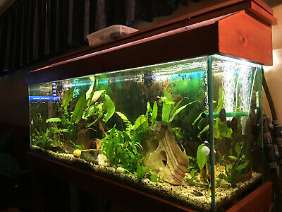 AU400 • Buy 4ft All Glass Tropical Fish Tank C/w Stand & Light & Filter Pump. Local Delivery