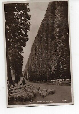 £1 • Buy Meikleour, Perthshire - Famous Beech Hedge - Valentines Real Photo Old Postcard