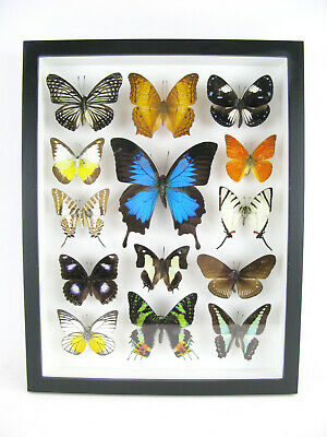 14 Beautiful Butterflies In 3D Box - Real - Taxidermy - One-of-a-kind - Nice 07 • 169.95£