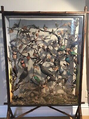 Antique Taxidermy Birds. Victorian Case Of 54 Birds In Need Of Attention • 410.09£