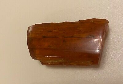 Raw Piece Of Tizer Amber With Insects - 14g - Ruby/red Ish Colour • 10£