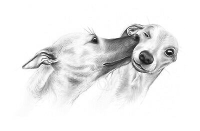 £3.30 • Buy Whippet Lurcher Greeting Card Whippets Hound Dog Kiss Cute Valentines Day Art