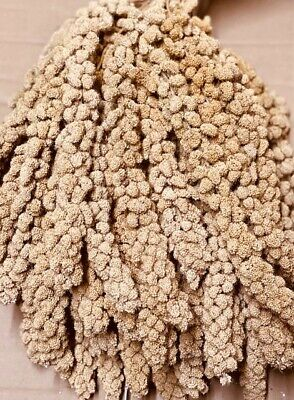 Top Quality Millet Sprays For Bugies Finches Canaries Yellow Millet Seed Sprays • 8.95£