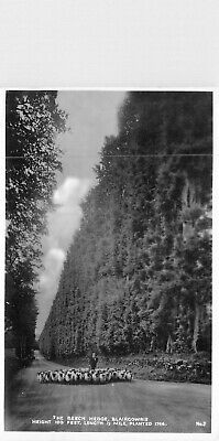 £3.95 • Buy The Beech Hedge, Blairgowrie. 100 Feet High. Planted 1746 - Real Photo Postcard
