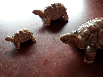 Wade Porcelain Turtles Tortoises Family Of 3. Father Is Trinket Box.  • 5£