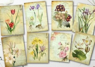£3.20 • Buy 8 Vintage Flower ATC Cards Tags Toppers Embellishments