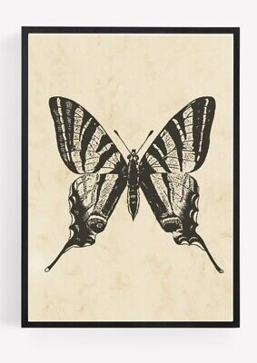 £2.84 • Buy Entomology Vintage Butterfly Print Picture Wall Art Unframed Home Decor A4 1