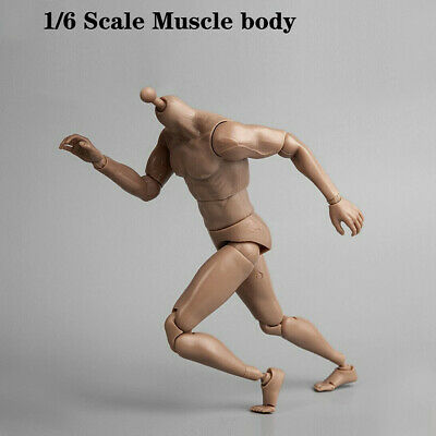 £20.88 • Buy 1/6 Scale Muscular Male Action Figure Toy Body For 12  Head Sculpt Wolverine UK