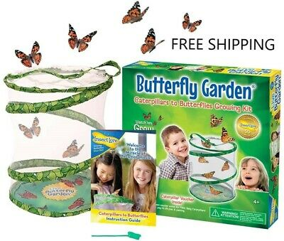 £24.80 • Buy Insect Lore - GIANT Live Butterfly Garden Hatching Kit - FREE SHIPPING Across UK