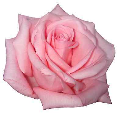 30 Premium Pink Rose Flowers Edible Flat (not 3d) Rice Paper Cup Cake Toppers D2 • 2.27£