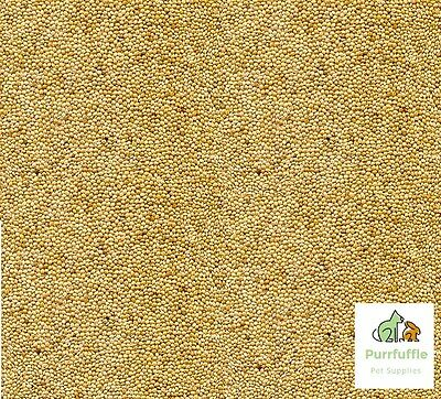 20kg WHITE MILLET Bird Seed Food Budgie Canary Finch Aviary Parrot Parakeet Feed • 21.49£