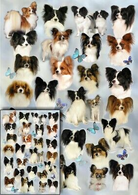 £2.75 • Buy Papillon Dog Wrapping Paper By Starprint - One Sheet (A2)with Matching Gift Card