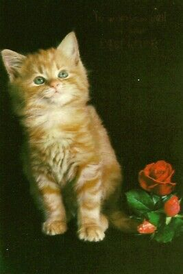 Good Luck In Your New Home Vintage 1970's Greeting Card - Cat Kitten Red Roses • 2.99£